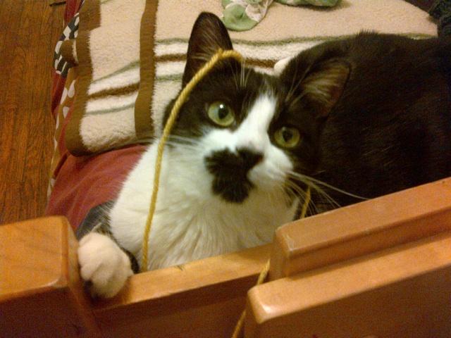 Ganymede loves to chase knitting.