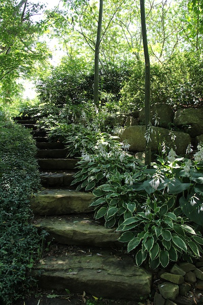 Stone steps that lead down to the patio by the ponds/back up toward the house.