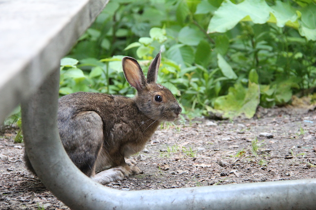 This bunny spent a lot of time hanging out in our campsite.